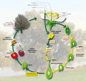 infografica biologia